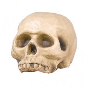 3d-realistic-skull-vac-foam