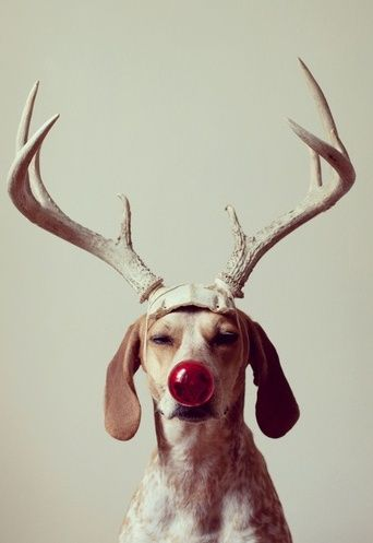 dog-red-nose