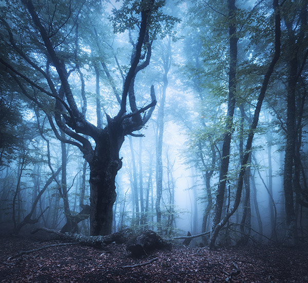 Spooky tree in a misty forest
